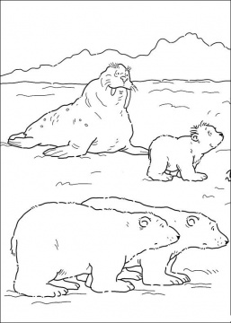 Dibujos de morsas morsapedia for Polar bear coloring pages